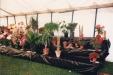 1987_cactus_class