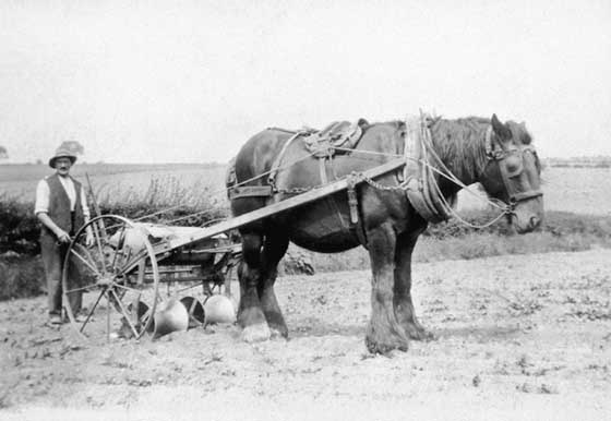 Horse and turnip drilling machine